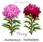 set of vector realistic peony...   Shutterstock .eps vector #760960840