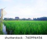 paddy rice field green grass on ... | Shutterstock . vector #760996456