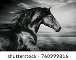 Stock photo portrait of the spanish running horse black and white photo 760999816