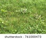 green fresh grass | Shutterstock . vector #761000473