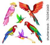 tropical bird set  parrot macaw ... | Shutterstock .eps vector #761041660