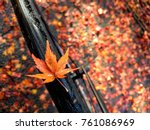 Orange Maple Leaf On A Bicycle...