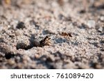 Small photo of Lasius ant larva and egg, extreme close-up with high magnification