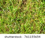 green grass in the park  an... | Shutterstock . vector #761155654