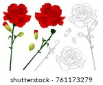 dianthus caryophyllus  ...   Shutterstock .eps vector #761173279
