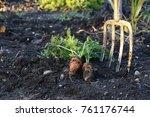 two fresh organic carrots in...   Shutterstock . vector #761176744
