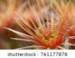 Close Up Of Cuctus Flower...