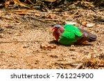 common emerald dove or... | Shutterstock . vector #761224900