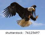Stock photo eagle in flight 76125697