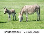 donkey in the nature | Shutterstock . vector #761312038