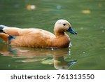 duck in a river | Shutterstock . vector #761313550