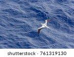 top view of seagull flies over... | Shutterstock . vector #761319130