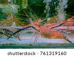 fresh river prawns or giant... | Shutterstock . vector #761319160