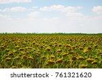 crop large field ripe sunflower ... | Shutterstock . vector #761321620