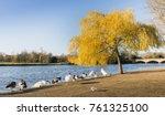 ducks on the edge of serpentine ... | Shutterstock . vector #761325100