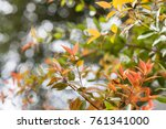 autumn leaves in colorful.... | Shutterstock . vector #761341000