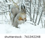 squirrel in the snow forest.... | Shutterstock . vector #761342248