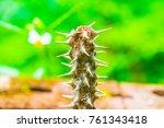 thorn of euphorbia milii ... | Shutterstock . vector #761343418