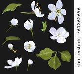 apple blossom vector clip art... | Shutterstock .eps vector #761362696
