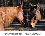 2 horses nuzzling one another | Shutterstock . vector #761420920