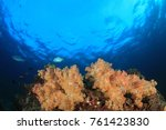 underwater coral reef and fish... | Shutterstock . vector #761423830