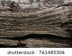 bark of tree | Shutterstock . vector #761485306