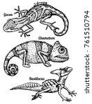 lizards vector set in sketch...   Shutterstock .eps vector #761510794