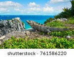 mexican iguana in tulum with... | Shutterstock . vector #761586220