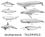 whales  dolphins collection... | Shutterstock .eps vector #761595913