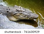 crocodile emerging from water... | Shutterstock . vector #761630929