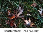 nice autumn frosted leaves on... | Shutterstock . vector #761761609