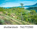 da phu pine hill.   Shutterstock . vector #761772583