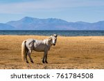 white horse standing on the... | Shutterstock . vector #761784508