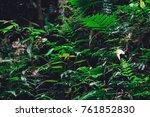 green leaves on black... | Shutterstock . vector #761852830