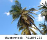 shy view through palms | Shutterstock . vector #761895238