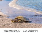 a turtle resting on a tropical... | Shutterstock . vector #761903194