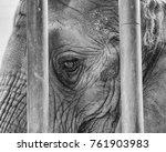 A Black And White Elephant Hea...