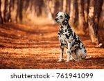 dog breed dalmatian for a walk | Shutterstock . vector #761941099