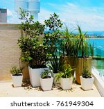 potted plants. potted plants on ... | Shutterstock . vector #761949304