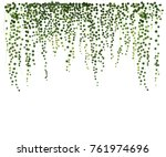 ivy wall background. greenery... | Shutterstock .eps vector #761974696