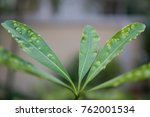 plant diseases tree with