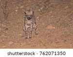striped hyena peeing | Shutterstock . vector #762071350