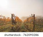 autumn in the vineyard  raws of ... | Shutterstock . vector #762093286