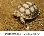 african spurred tortoise... | Shutterstock . vector #762124870