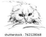 cat portrait sketch | Shutterstock . vector #762128068