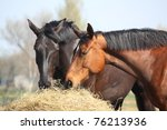 Black And Brown Horses Eating...