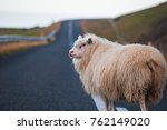 white sheep standing in the... | Shutterstock . vector #762149020