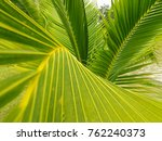 green leaves background  walls... | Shutterstock . vector #762240373