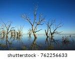 Dead Trees  Standing Stark...