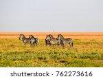 herd of zebra in the liuwa... | Shutterstock . vector #762273616